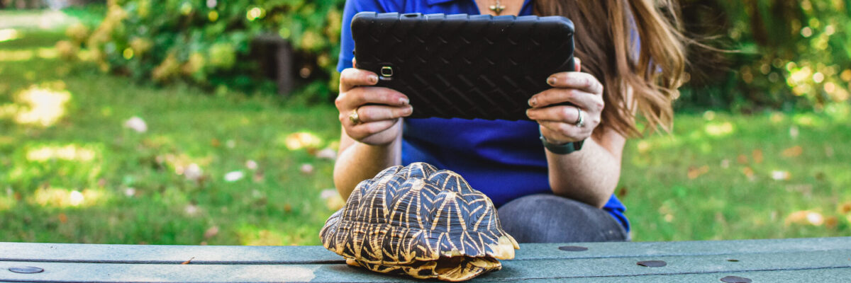 Woman holding a tablet taking a picture of a turtle shell